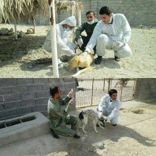 واکسیناسیون سگ ها در پناهگاه سگ شهرداری بندرخمیر انجام شد